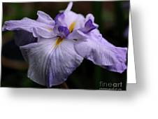 Japanese Iris In Bloom Greeting Card
