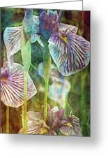 Japanese Iris Tall 2694 Idp_4 Greeting Card