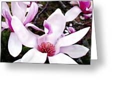 Japanese Magnolia Greeting Card