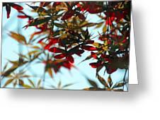 Japanese Maple 1592 Greeting Card