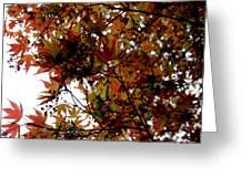 Japanese Maple 2011-1 Greeting Card