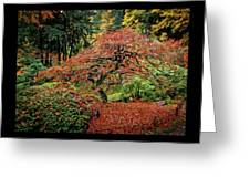 Japanese Maple At The Japanese Gardens Portland Greeting Card