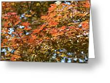 Japanese Maple Beauty Greeting Card