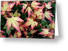 Japanese Maple Greeting Card by Cynthia Adams