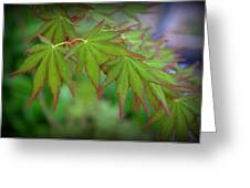 Japanese Maple Foliage Greeting Card