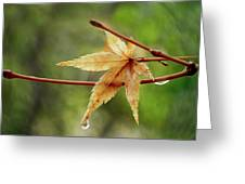 Japanese Maple In The Rain Greeting Card