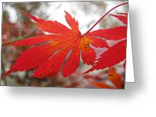 Japanese Maple Leaf 1 Greeting Card