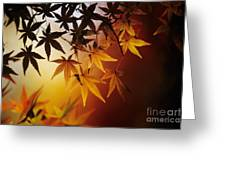 Japanese Maple Leaf Greeting Card