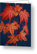 Japanese Maple Leaves In Autumn Greeting Card
