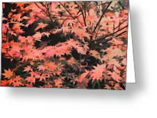 Japanese Maple - Nature Art Greeting Card