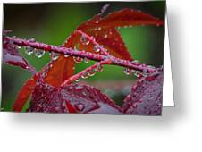 Japanese Maple On A Rainy Day Greeting Card