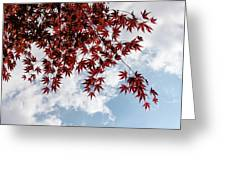 Japanese Maple Red Lace - Horizontal View Downwards Right Greeting Card