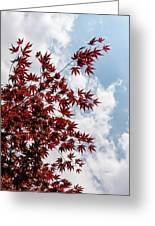 Japanese Maple Red Lace - Vertical Up Right Greeting Card