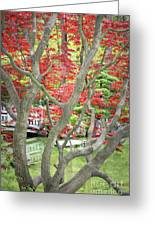 Japanese Maple Tree And Pond Greeting Card