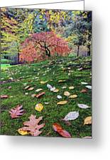 Japanese Maple Tree On A Mossy Slope Greeting Card
