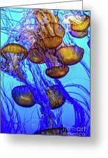 Japanese Sea Nettles Greeting Card