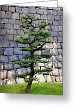 Japanese Tree Greeting Card