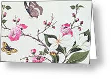 Japonica Magnolia And Butterflies Greeting Card