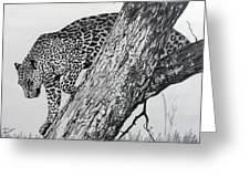 Jaquar In Tree Greeting Card