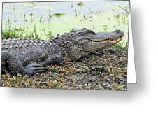 Jarvis Creek Gator Greeting Card