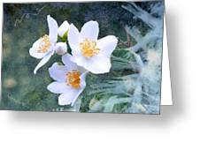 Jasmin Flower Greeting Card