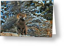 Jasper Alpha Male Greeting Card
