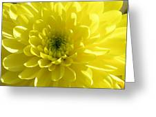 Yellow Luminosity  Greeting Card