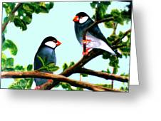 Java Sparrows  #102 Greeting Card