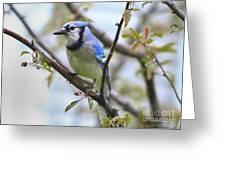 Jay In June Greeting Card