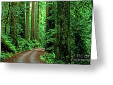 Jedediah Smith Redwoods                            Greeting Card