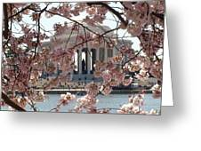 Jefferson Through The Cherry Blossoms Greeting Card