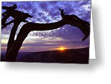 Jeffrey Pine Sentinel Dome Greeting Card