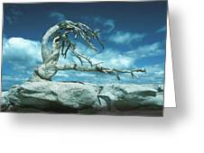 Jeffrey Pine Sentinel Dome Greeting Card