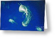 Jelly Fish In Bahamas Greeting Card
