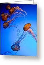 Jelly Fish Iv Greeting Card