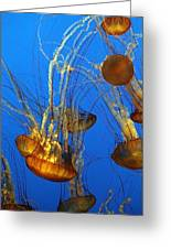 Jellyfish Family Greeting Card