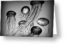 Jellyfish In Monochrome Greeting Card