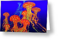Jellys4 Greeting Card