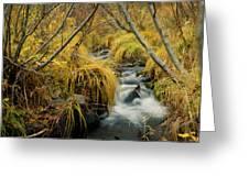 Jenny Creek In Autumn Greeting Card