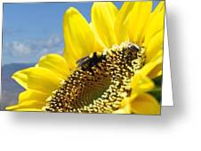 Jerome Bees Greeting Card