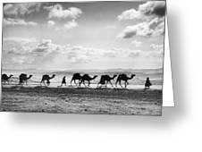 Jerusalem: Caravan, C1918 Greeting Card