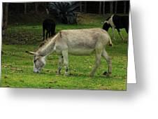 Jerusalem Donkey Grazing In A Field Greeting Card