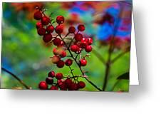Jessies Berries Greeting Card