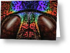 Jewel Beetle Detail Greeting Card