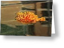 Jewel Drops - Orange Chrysanthemum Bloom Floating In A Fountain Greeting Card