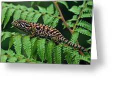 Jeweled Chameleon Furcifer Lateralis Greeting Card