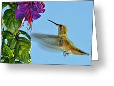 Jeweled Rufous In Afternoon Light Greeting Card