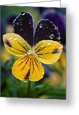 Jewelled Pansy Greeting Card