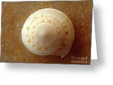 Jewels Of The Sea - Tiger's Eye Swirl Greeting Card