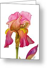 Jody's Iris Greeting Card